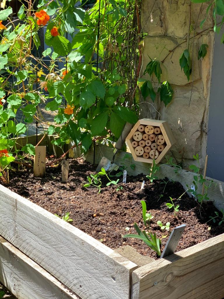 Sweet peas, zinnia, Veronica, Cornflower